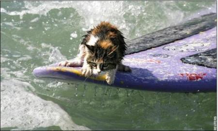 nicolasa-surfercat.jpg