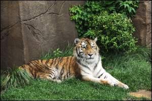 """Anna the """"Cougar"""" (Photo - Ryan Randolph, Erie Times-News)"""