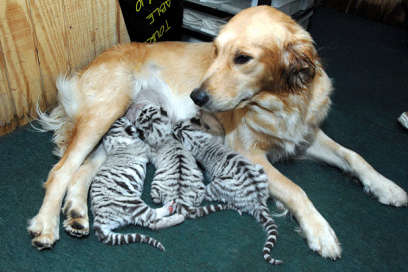 A Cats Best Friend Is Occasionally A Dog Cats Working