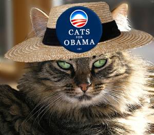 Oliver of Berkley, CA, supports Obama (Photo - Catster.com)