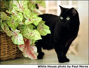 India, or a stunt cat named Willard?