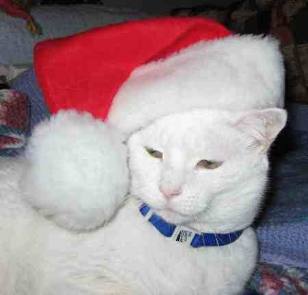 """Ho, ho, ho, I think I feel a hairball coming up!"""