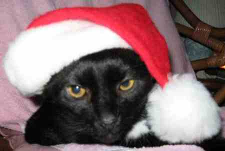 """What? You didn't know Santa Claws is black?"""