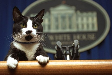 Socks in his White House days. (Photo-Marcy Nighswander/AP)