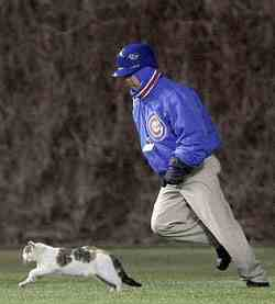 Run, kitty, run! (AP photo)