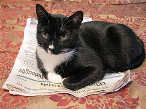 Oreo likes to stay on top of current events, too. (Photo - Kelvin Collins)