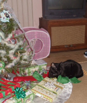 Every Christmas tree needs a guard cat to watch the presents. Cole parks himself on that red one like a mother hen.