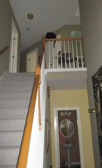 160326-Roc-StairsDaredevilParents